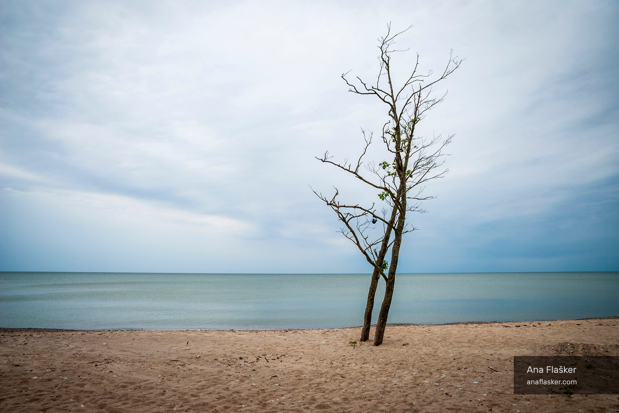 lonely tree by the sea, latvia