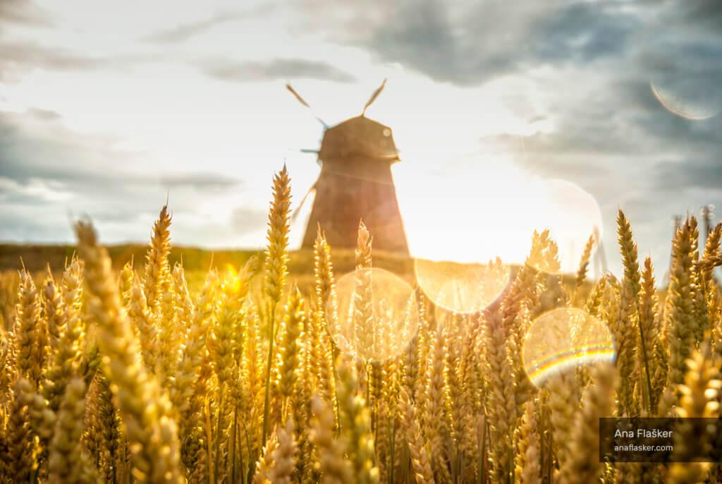 Golden fields wind mill